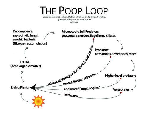 The Poop Loop